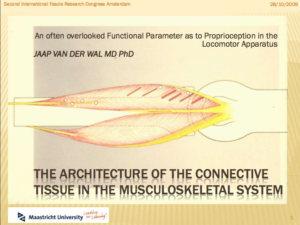 The Architecture of the Connective  Tissue in the Musculoskeletal System